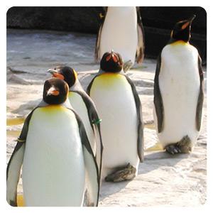 暑いので脈絡もなくペンギンの写真