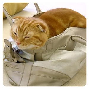 猫カフェの猫ちゃんその2