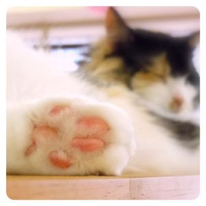 猫カフェの猫ちゃんその4