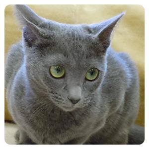 猫カフェの猫ちゃんその7
