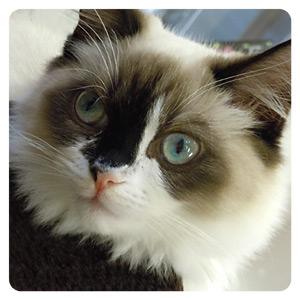 猫カフェの猫ちゃんその9
