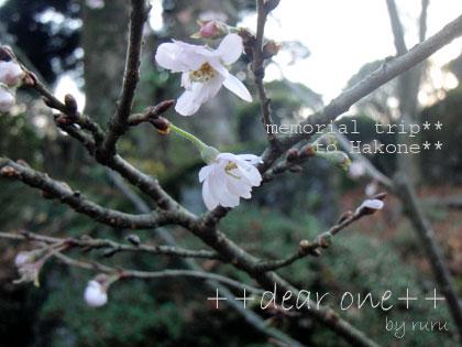箱根旅行121201_10