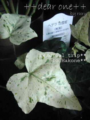 箱根旅行121201_19