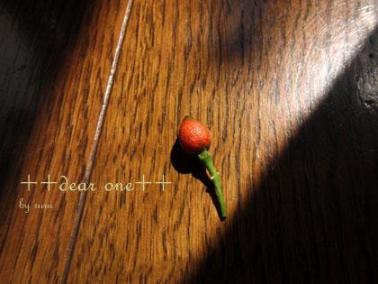 春の収穫…!? ~ シルクジャスミンの種(2013/03/28)