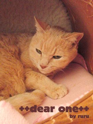 愛猫130502_3