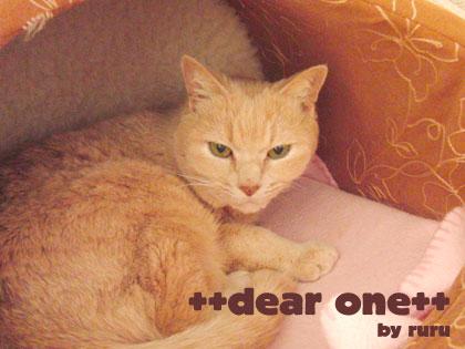 愛猫130502_4