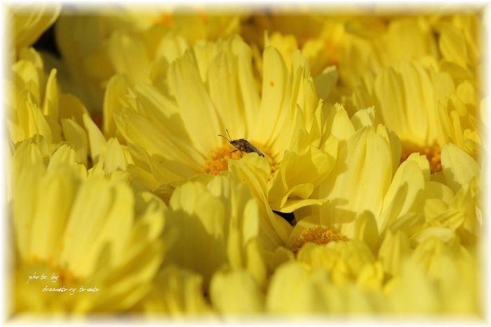 IMG_0064 a