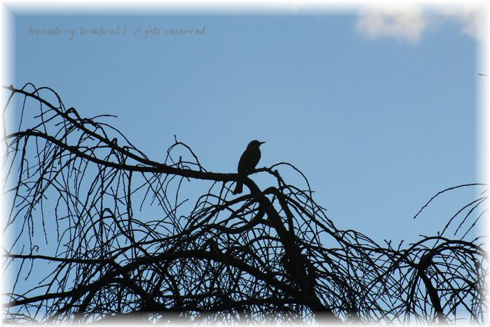 IMG_0478 a