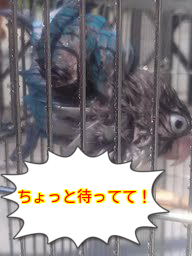 20130629230534b83.png