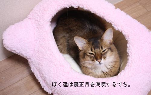 schuma5.jpg