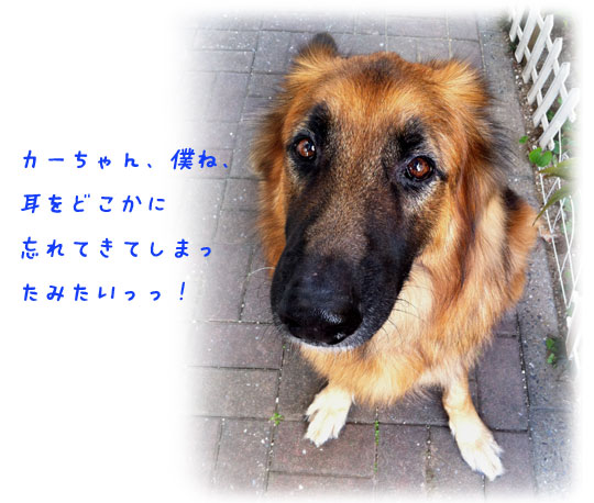 20121103210605001.jpg