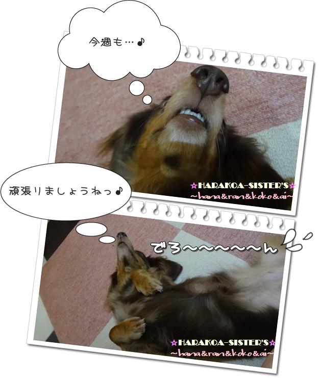 20120918-3.jpg