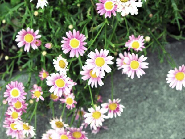 flor20001_convert_20120621121355.jpg