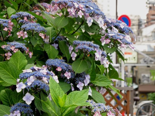 flor30001_convert_20120621121601.jpg