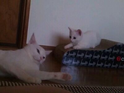 fc2blog_20120622135124428.jpg