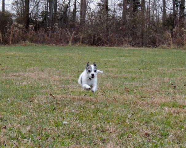 Dog Run (4)