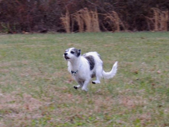 Dog Run (5)