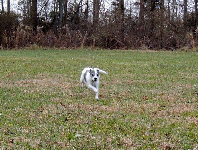 Dog Run (3)