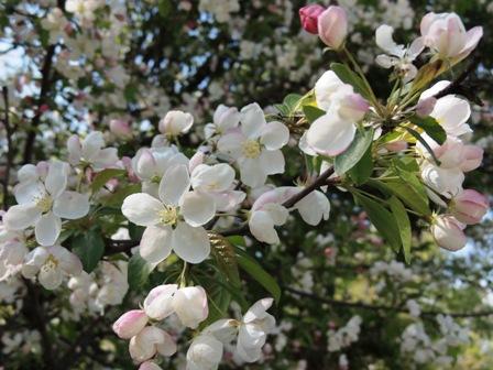今日のお花 (2)