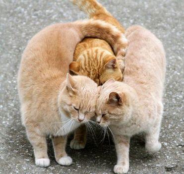 love_atack.jpg