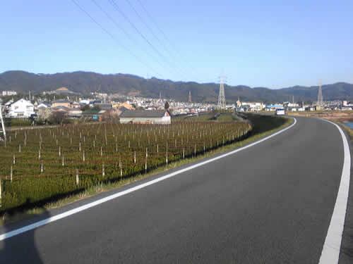 ujigawa4.jpg