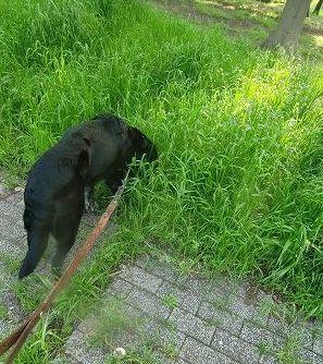 バーディとお散歩 003b