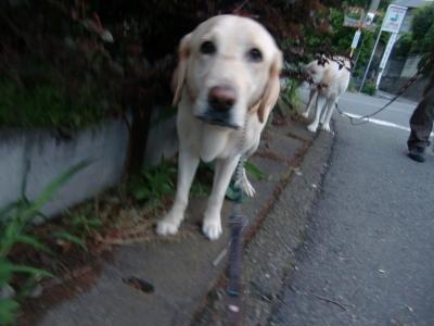 6.1 お散歩 004