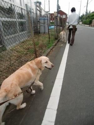 6.1 お散歩 001