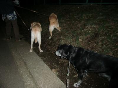 夜のお散歩 008