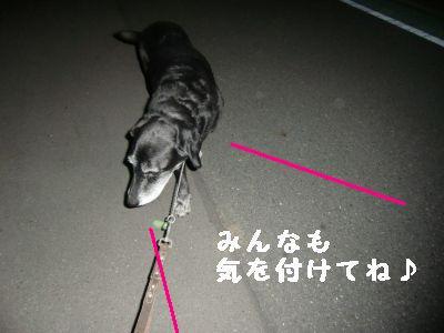 夜のお散歩 001