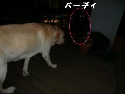 夜のお散歩 009