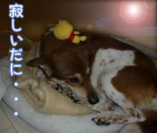 翔ちゃんのコピー