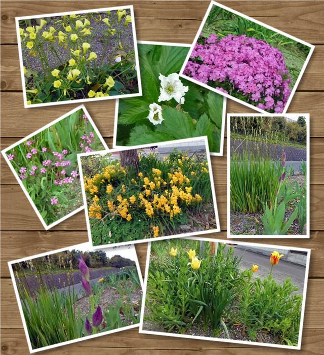 近所の花たち1