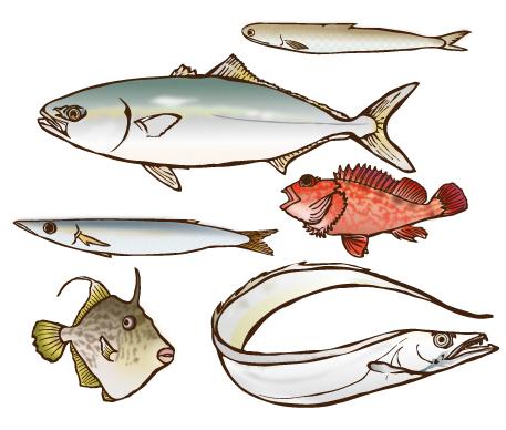 愛媛の魚はうまいのです。