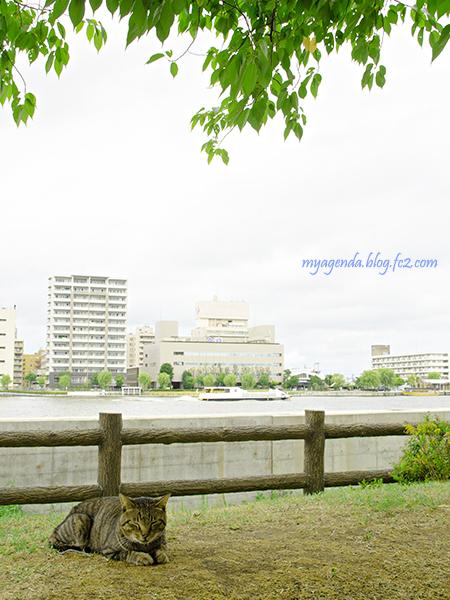 DSC_8199.jpg