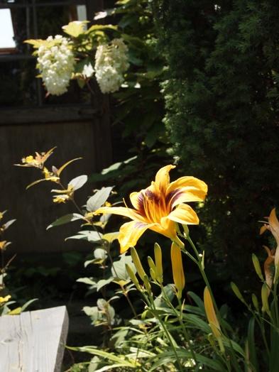my-garden 043 (3)