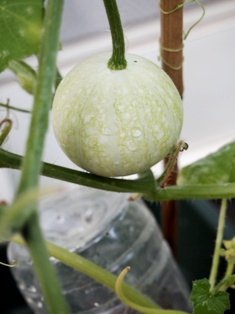 my-garden 016 (2)