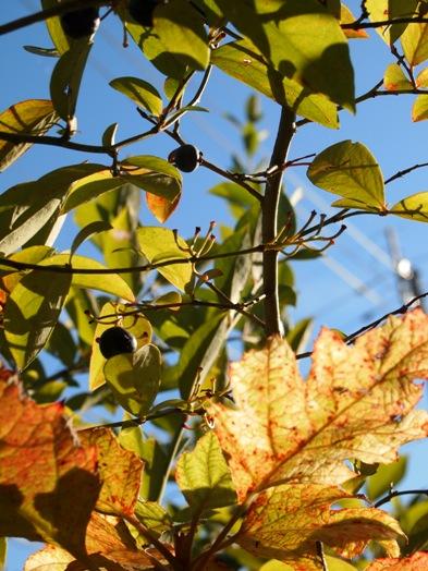 my-garden 062 (2)