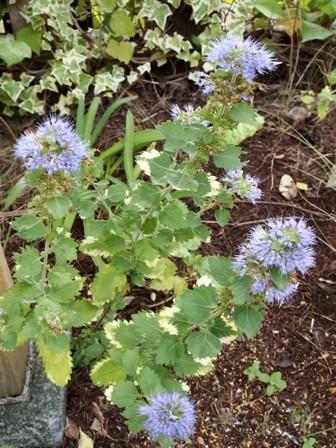 my-garden 039 (3)