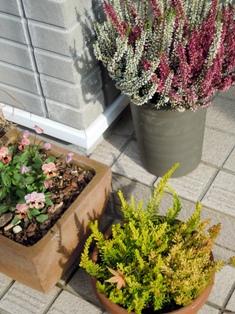 my-garden 017 (5)