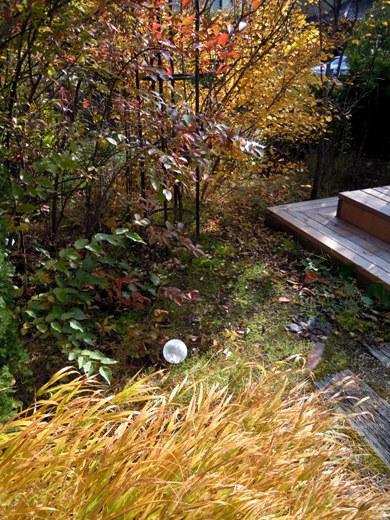 my-garden 054