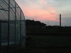[写真]ポレポレ農園の夕暮れ(西の空)