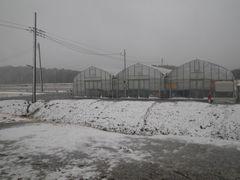 [写真]雪景色のポレポレ農園