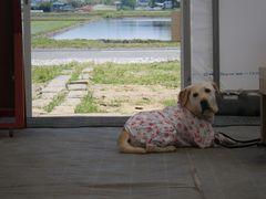 [写真]受付ハウスでアイメイトがご主人様を待っているところ