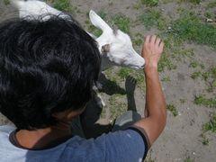 [写真]アランが、汗をかいた農園主の腕に近寄ってきたところ