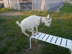 [写真]アランがベンチに登ろうとしているところ