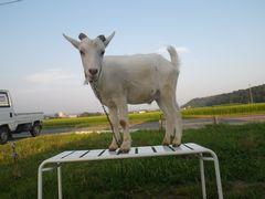 [写真]アランがベンチの上でモデル立ちしているところ