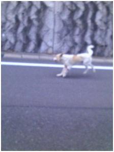 防府ワイヤー犬ー1