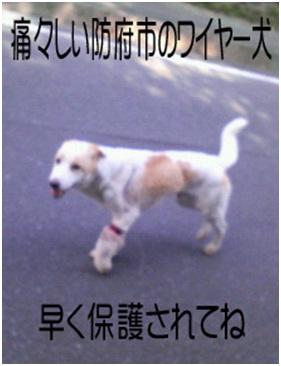防府ワイヤー犬ー3