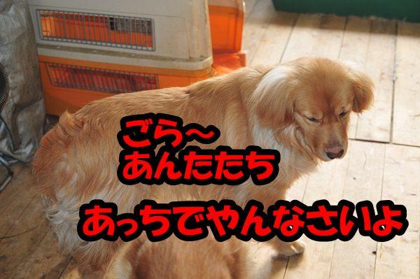 DSC_2447.jpg